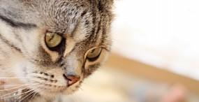 猫の壁紙#137サムネイル