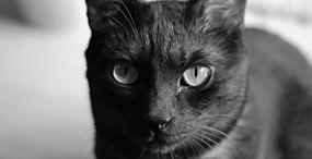 猫の壁紙#92サムネイル