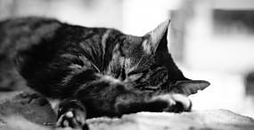 猫の壁紙#93サムネイル