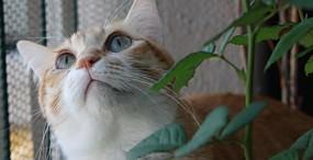 猫の壁紙#94サムネイル
