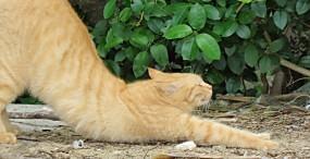 猫の壁紙#98サムネイル