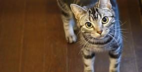猫の壁紙#99サムネイル