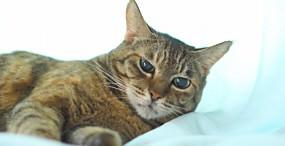 猫の壁紙#102サムネイル