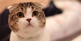 猫の壁紙#105サムネイル