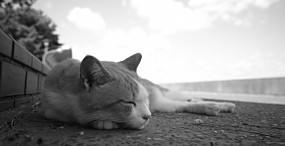 猫の壁紙#109サムネイル