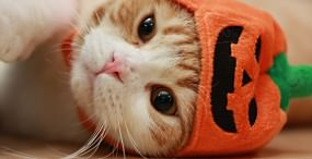 猫の壁紙#111サムネイル