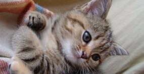 猫の壁紙#17サムネイル