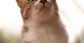 猫の壁紙#117サムネイル