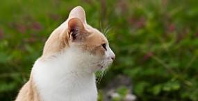 猫の壁紙#119サムネイル