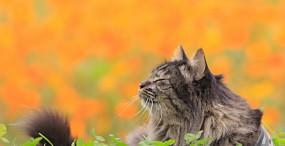 猫の壁紙#19サムネイル