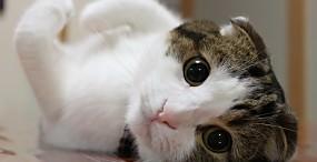 猫の壁紙#4サムネイル
