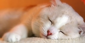 猫の壁紙#8サムネイル