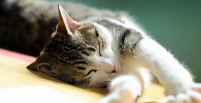 猫の壁紙#16サムネイル