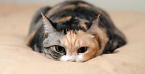 猫の壁紙#18サムネイル