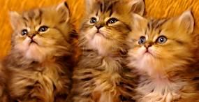 猫の壁紙#22サムネイル