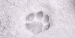 猫の壁紙#24サムネイル
