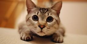 猫の壁紙#25サムネイル