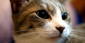 猫の壁紙#27サムネイル