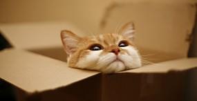 猫の壁紙#29サムネイル