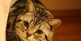 猫の壁紙#31サムネイル