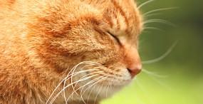 猫の壁紙#32サムネイル