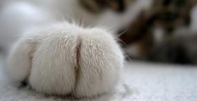 猫の壁紙#6サムネイル