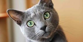 猫の壁紙#34サムネイル
