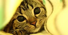 猫の壁紙#36サムネイル