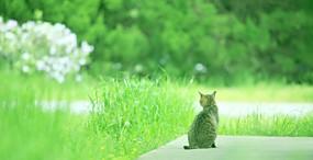 猫の壁紙#40サムネイル