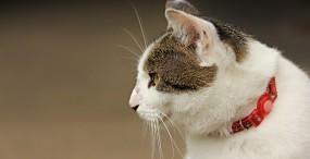 猫の壁紙#45サムネイル
