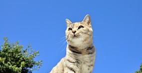 猫の壁紙#47サムネイル