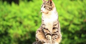 猫の壁紙#60サムネイル