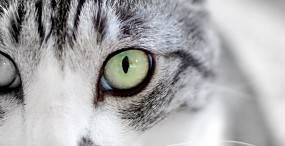 猫の壁紙#62サムネイル