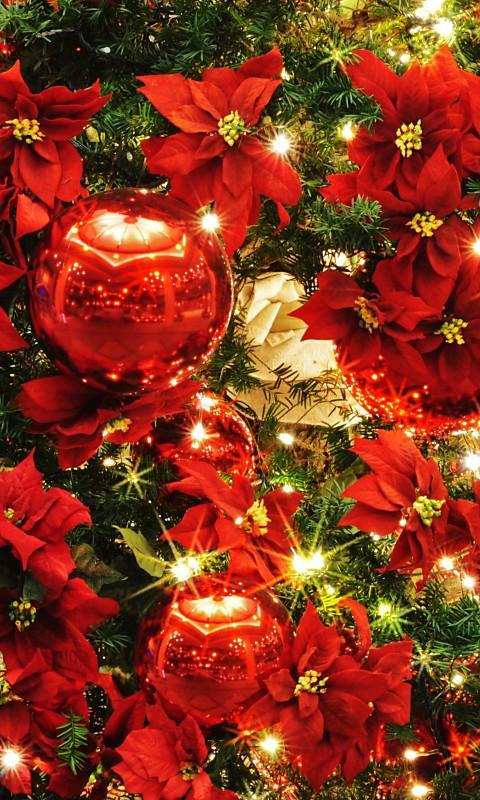 クリスマスの画像 p1_17