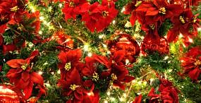 クリスマスの壁紙#56サムネイル