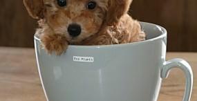 犬の壁紙#27サムネイル