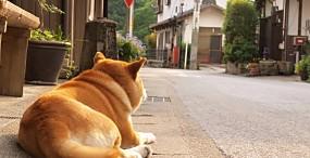 犬の壁紙#46サムネイル