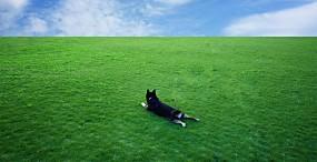 犬の壁紙#50サムネイル
