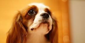 犬の壁紙#53サムネイル