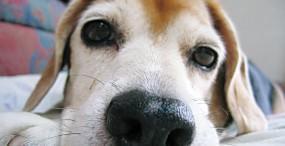 犬の壁紙#71サムネイル
