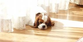 犬の壁紙#74サムネイル