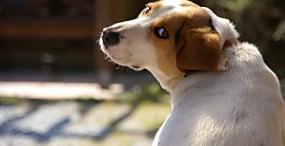 犬の壁紙#85サムネイル