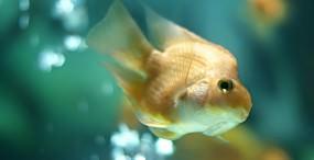 魚の壁紙#16サムネイル