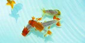 魚の壁紙#19サムネイル