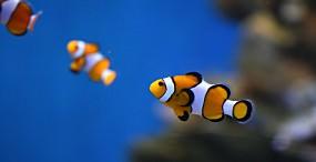 魚の壁紙#27サムネイル