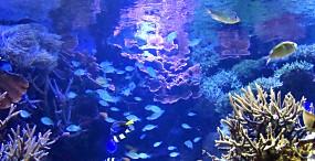 魚の壁紙#29サムネイル