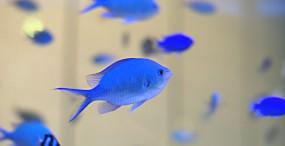 魚の壁紙#30サムネイル