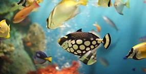 魚の壁紙#33サムネイル