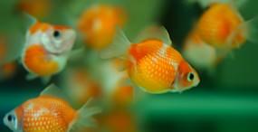 魚の壁紙#38サムネイル