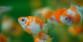 魚の壁紙#39サムネイル